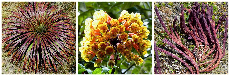 Cajas flora collage