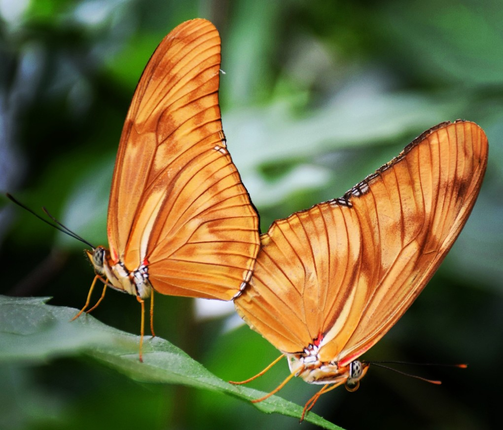 PHOTO OF THE WEEK: DANCE OF THE BUTTERFLIES