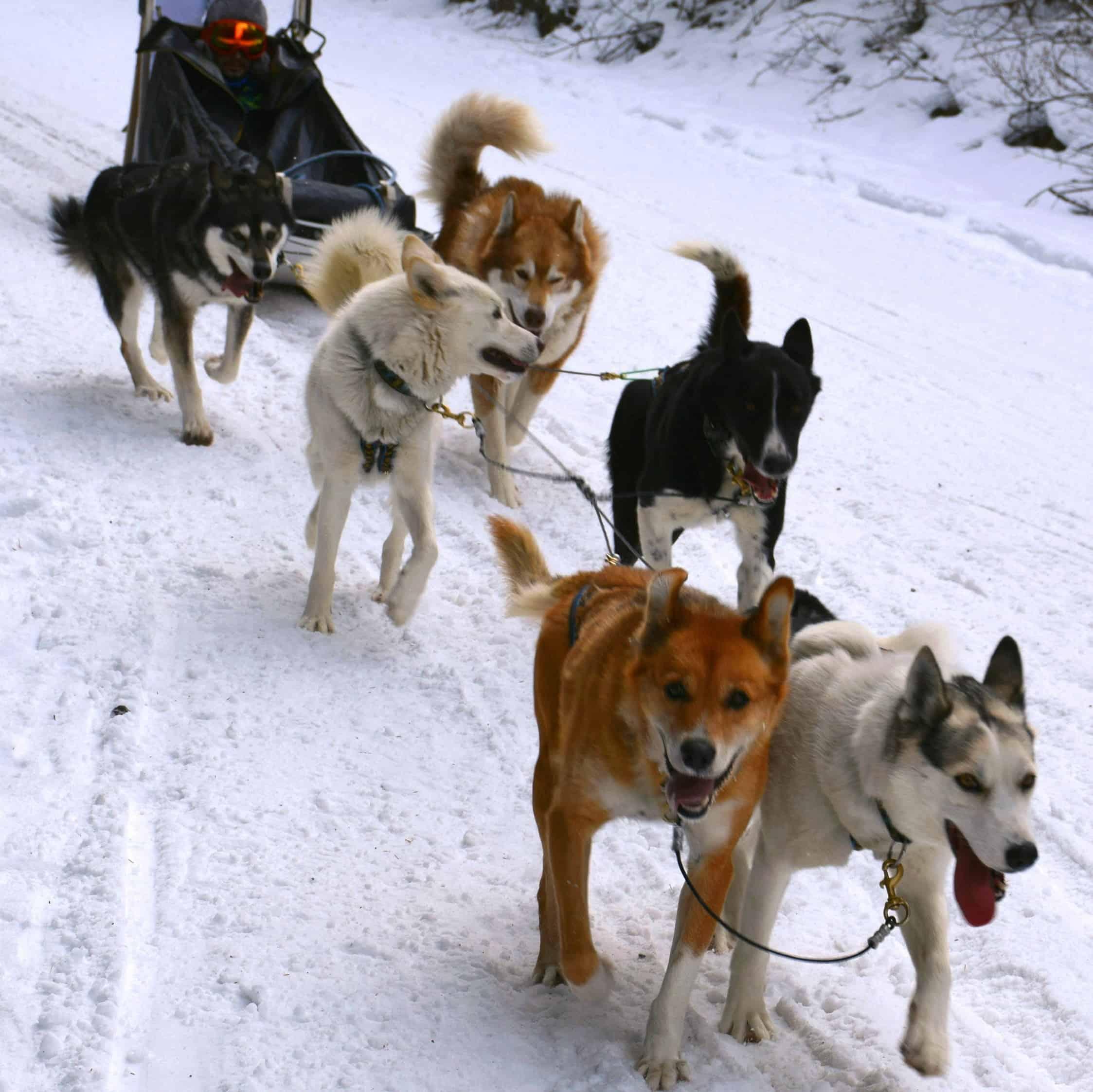 Dog sled action
