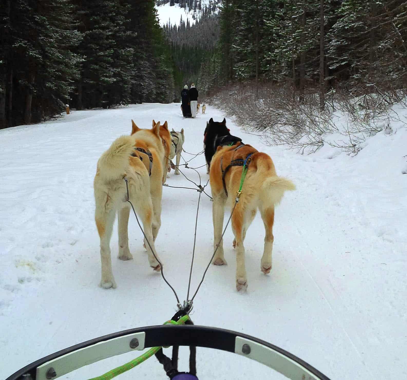 Dog sledding - view from sled