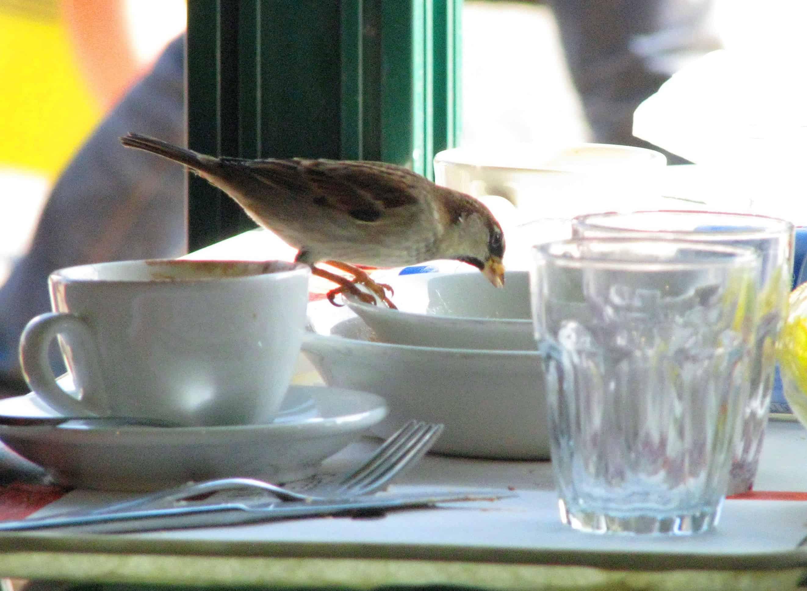 Verona Bird