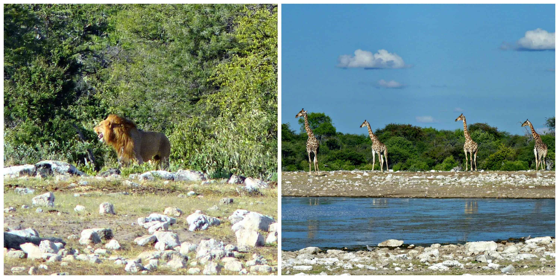Etosha National Park Collage