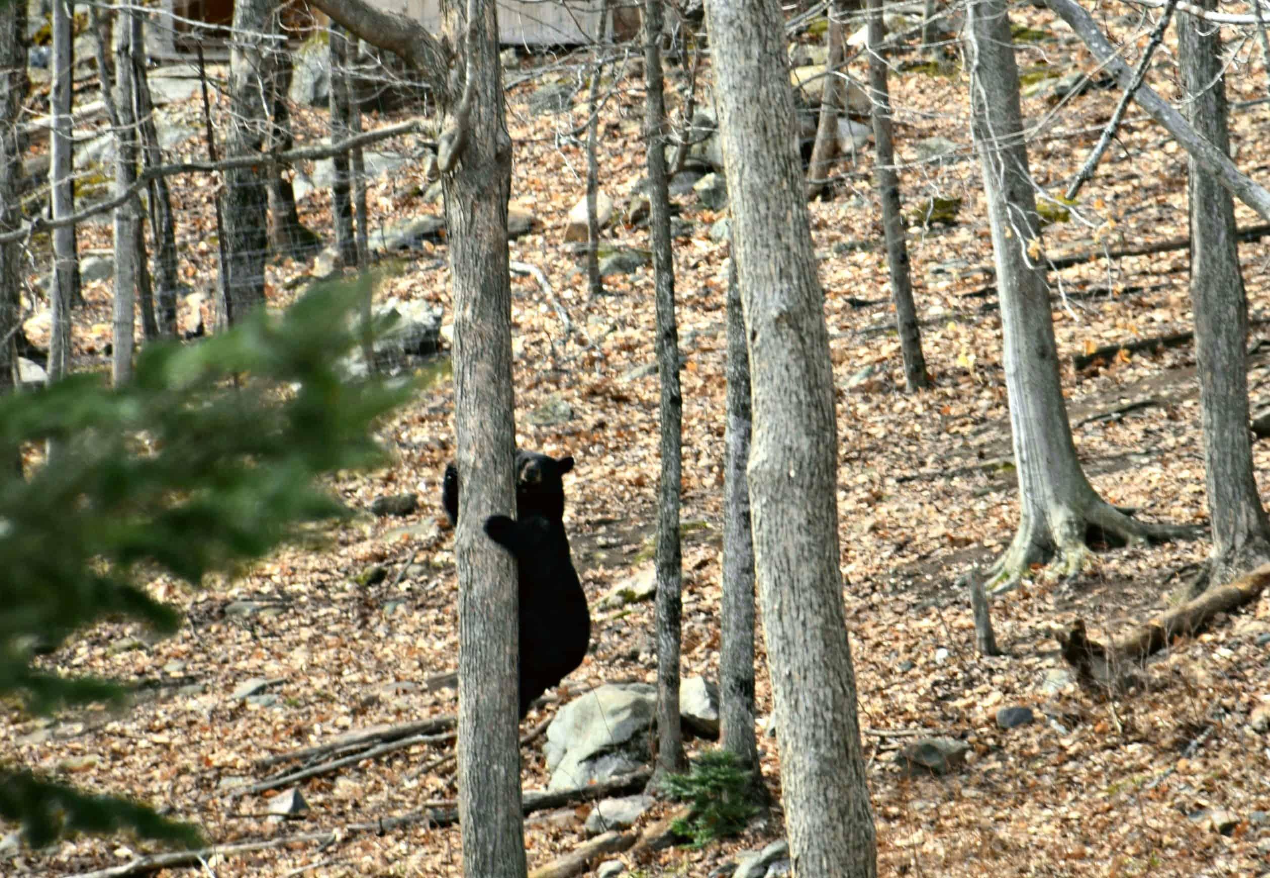 Bear, Parc Omega