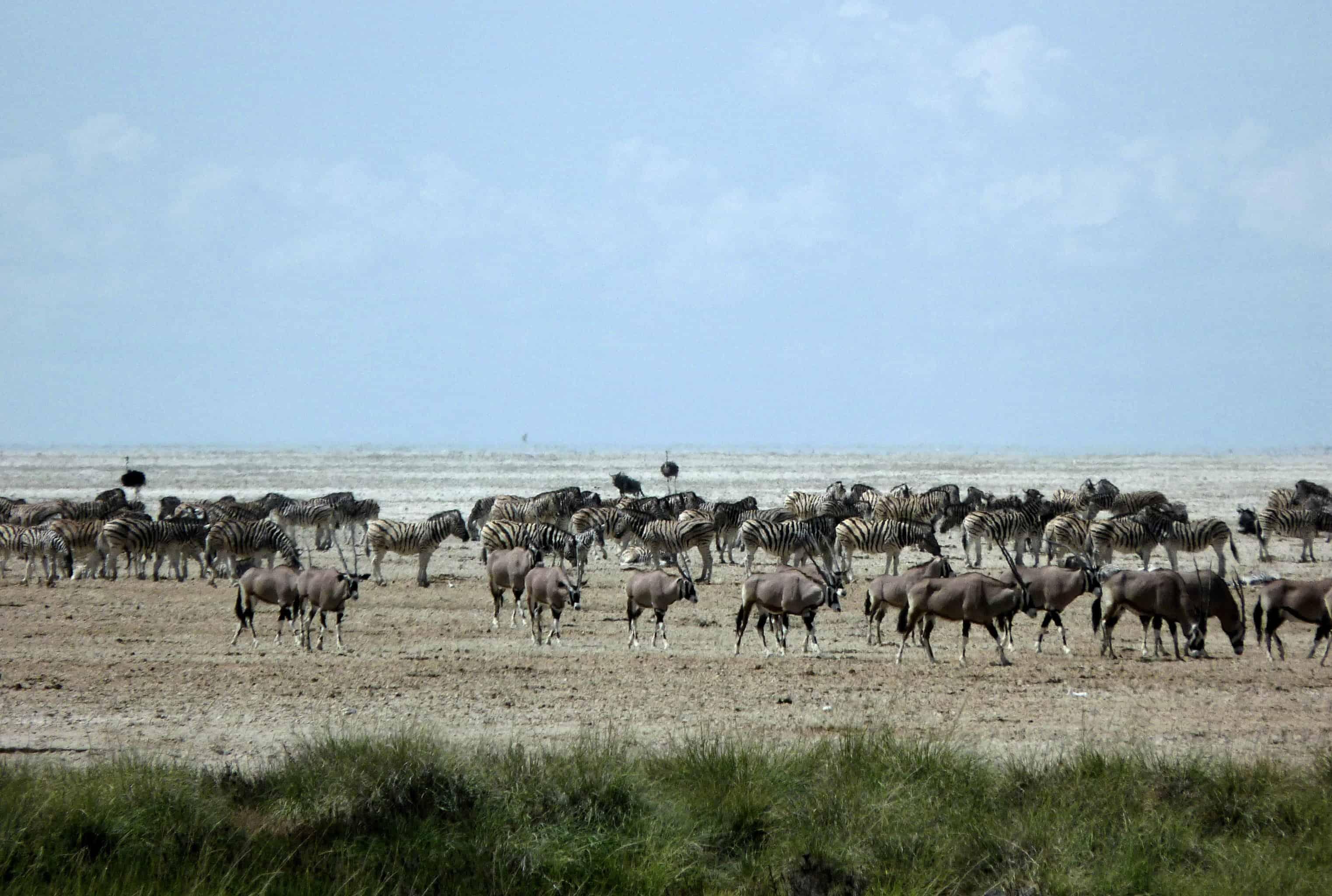 Etosha National Park, the Pan