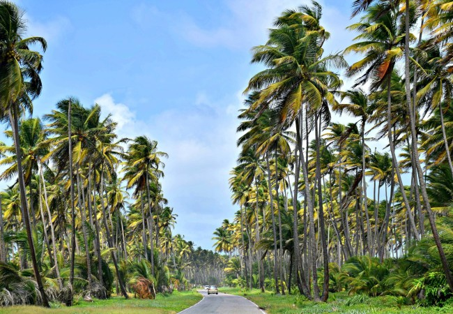 LESSONS IN LIMING ON THE COCONUT ROAD, TRINIDAD