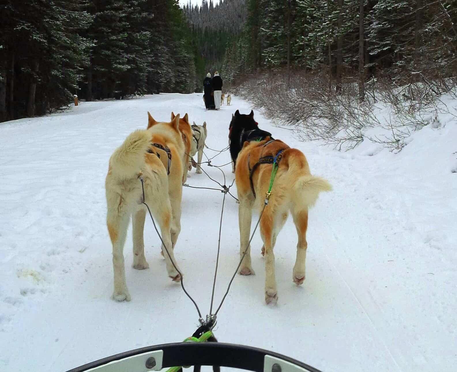 Dog sledding, Canmore, Alberta