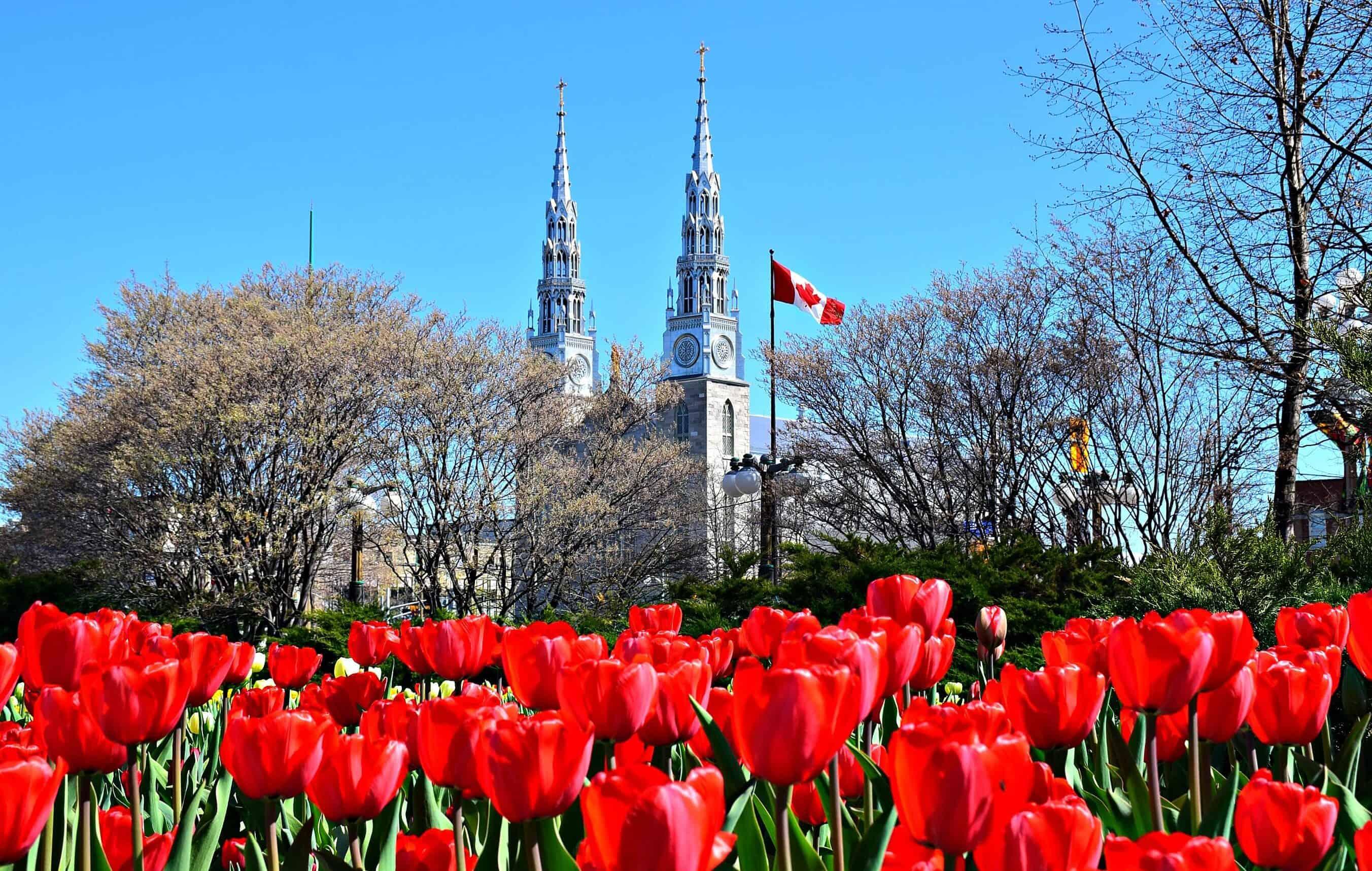 le hoi hoa tulip canada