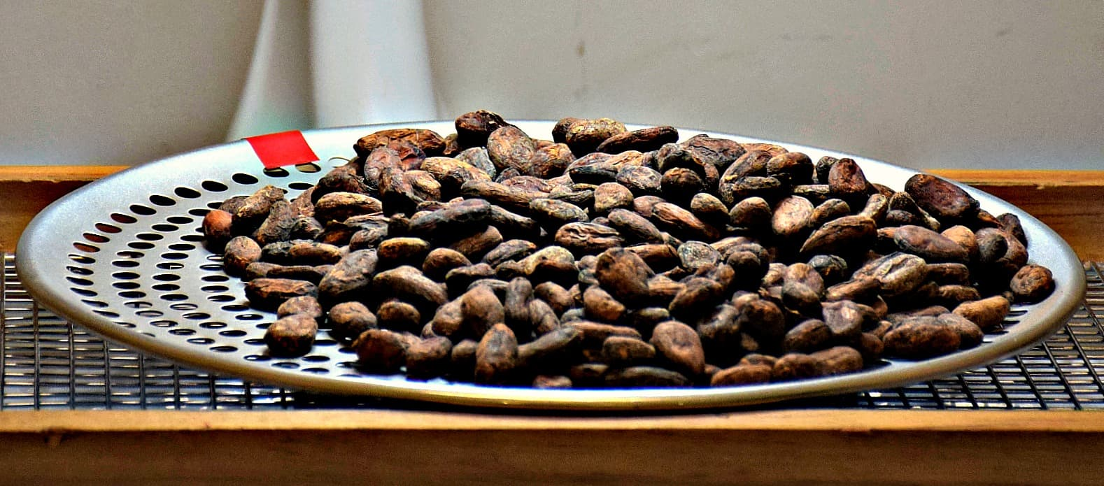 Cocoa Bean sorting