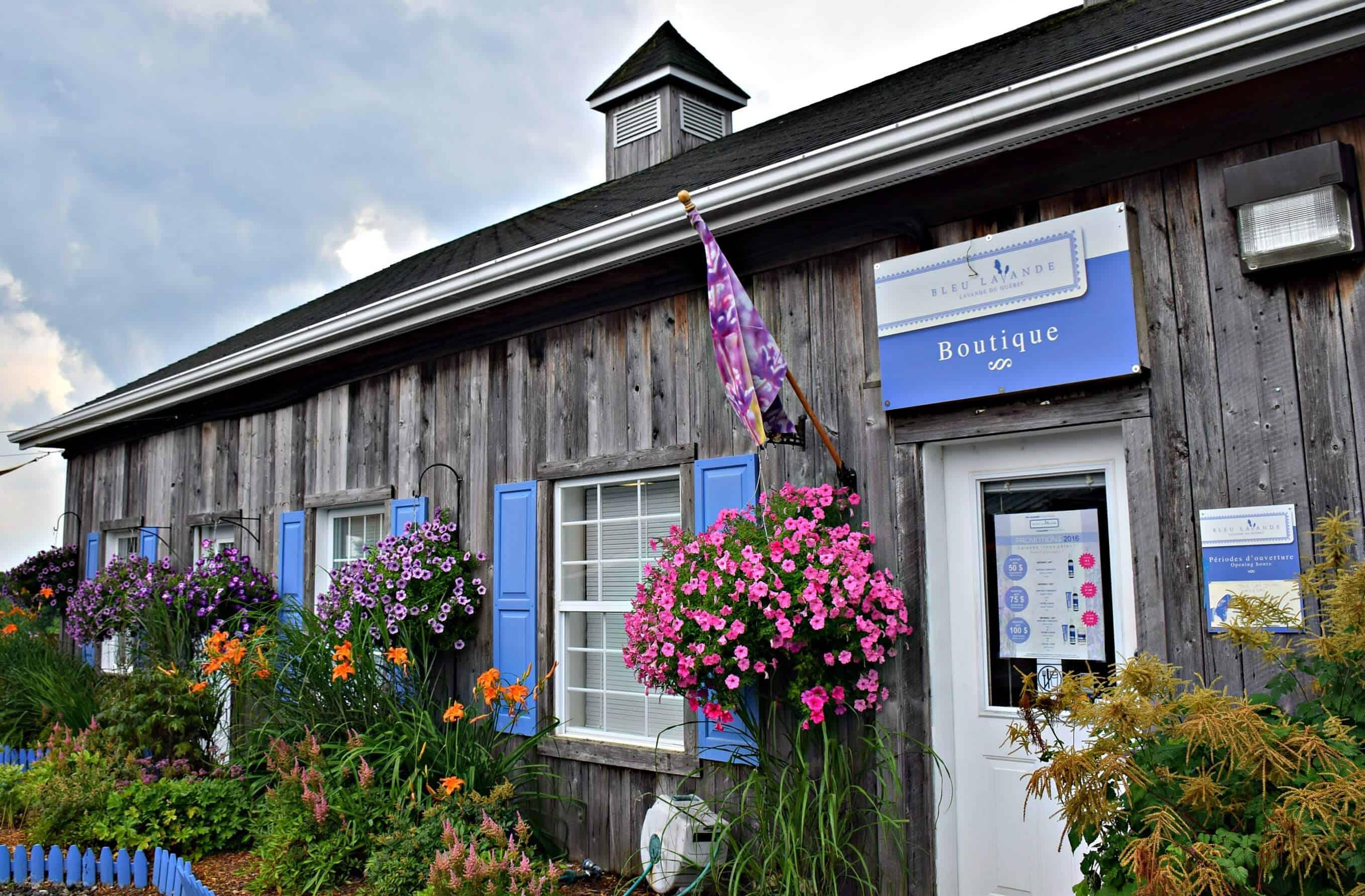 Bleu Lavande, Quebec