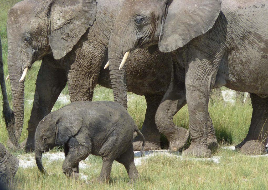 PHOTOS OF THE WEEK:  ELEPHANTS