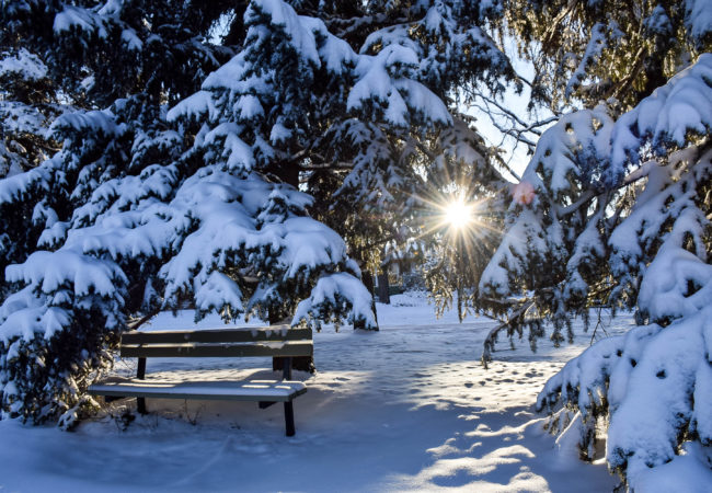 PHOTO OF THE WEEK:  MAGICAL SNOW IN CALGARY