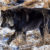 SITTING WITH WOLFDOGS: WHAT YOU NEED TO KNOW