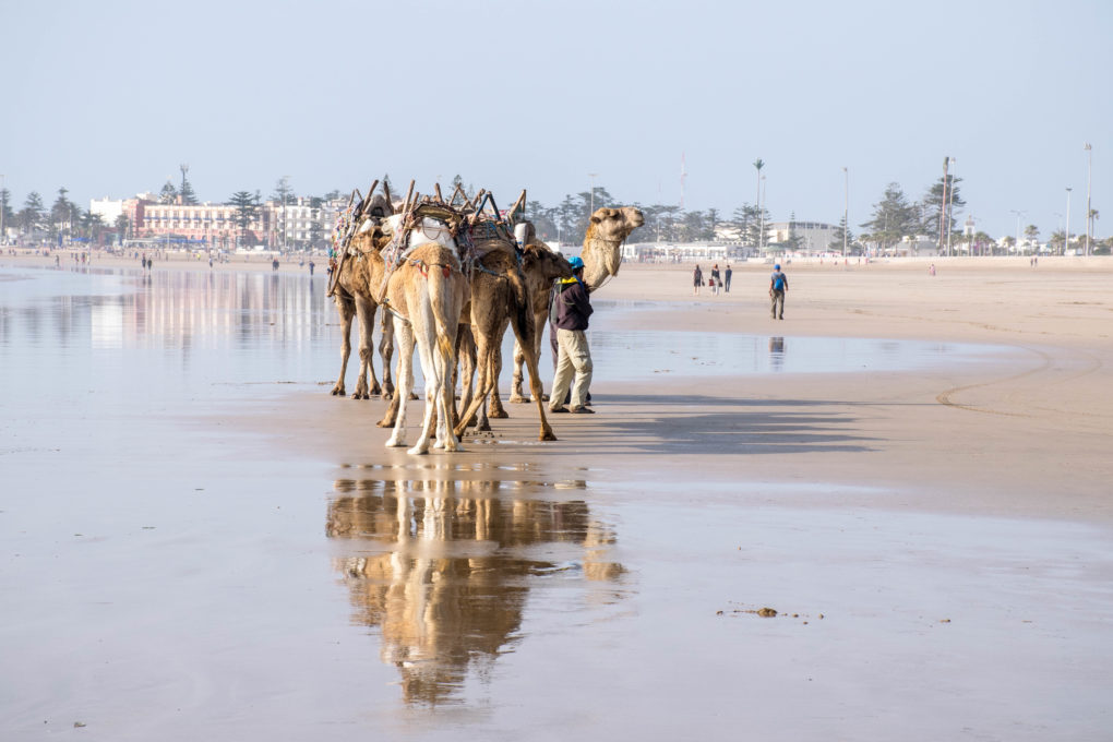 8 REASONS TO ADD ESSAOUIRA TO YOUR MOROCCO TRIP