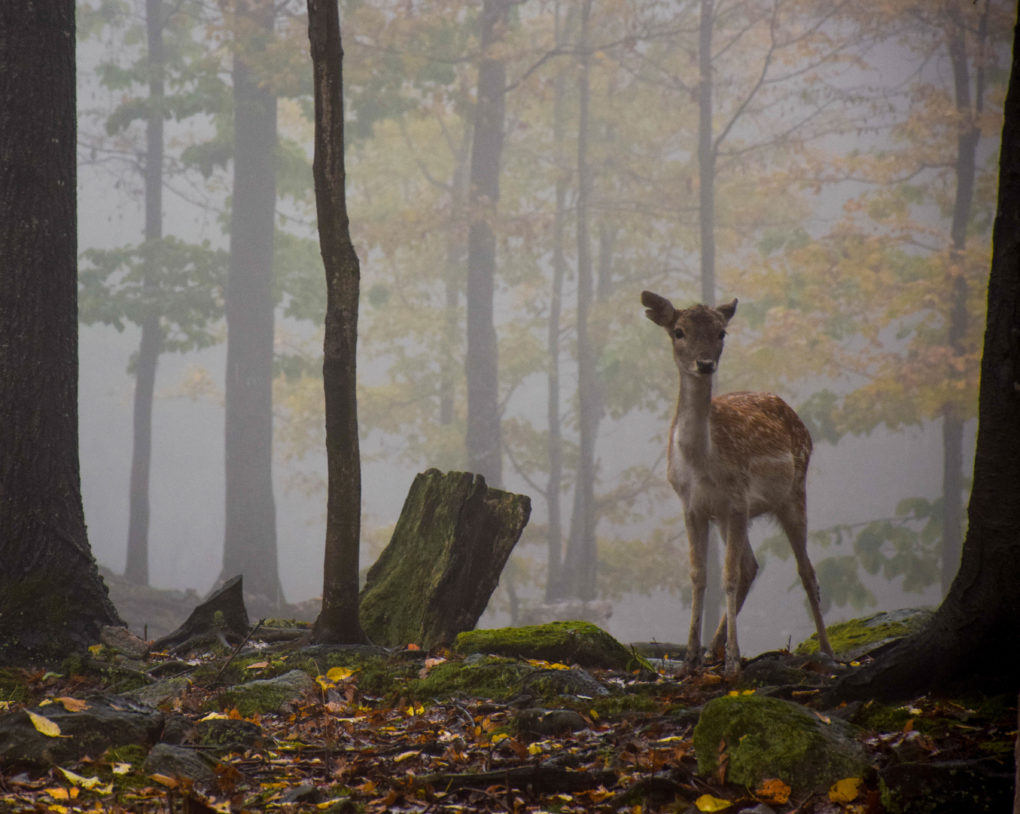 5 REASONS FOR A FALL VISIT TO THIS WILDLIFE PARK IN CANADA