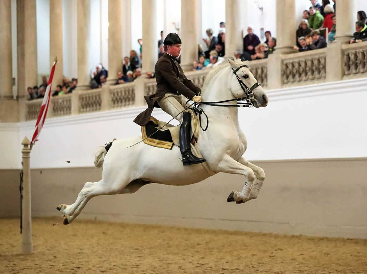 6 Terrific Ways To See The Lipizzaner Stallions Of Vienna In Real Life